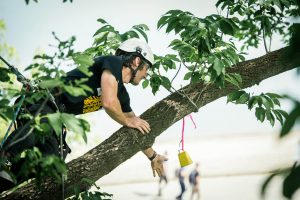 Daniel Chamberlin competing at the BC tree climbing Competition in Kamloops 2016