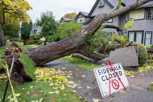 Advantage Tree care performs hazardous tree removals and emergency tree work in Victoria BC