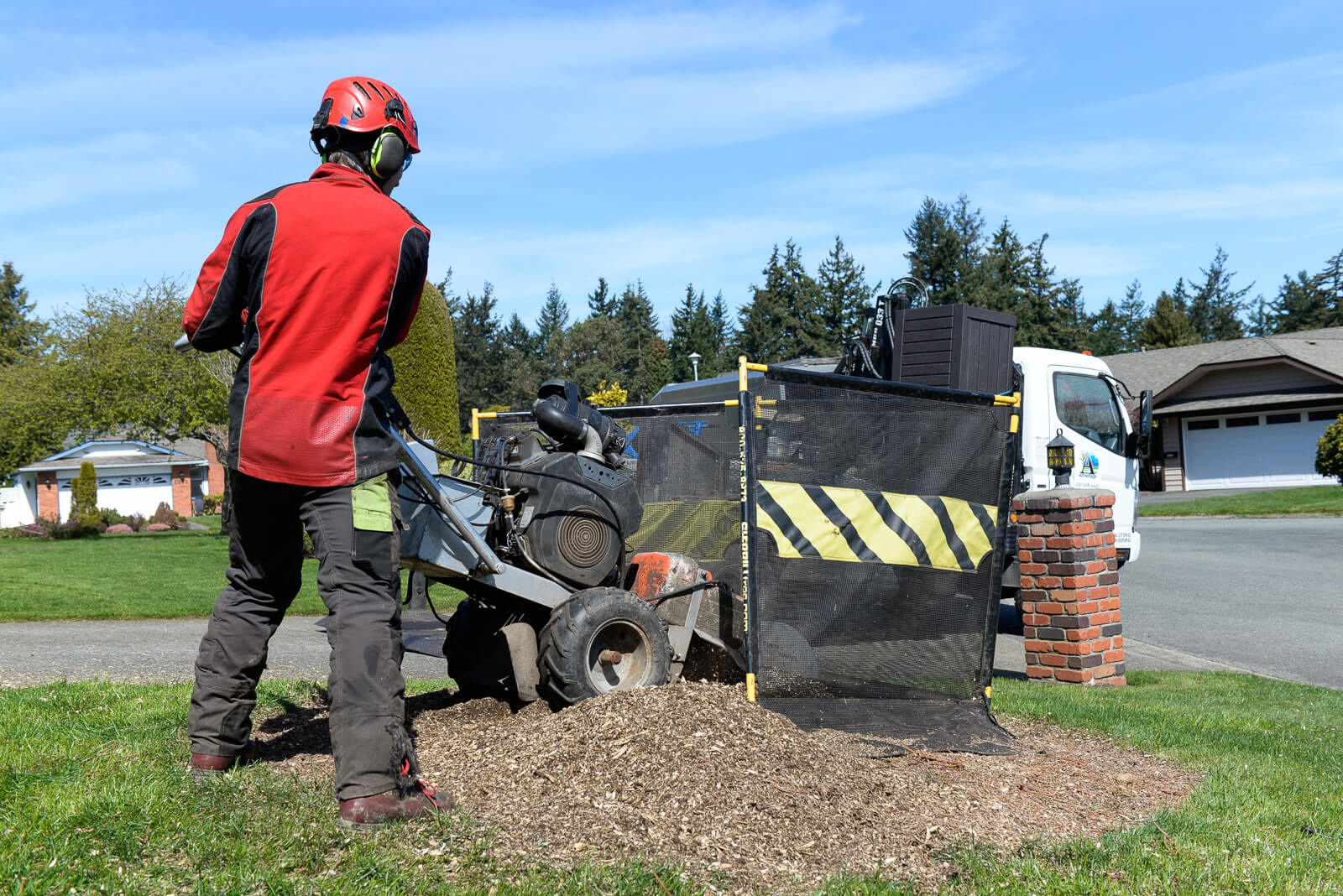 Advantage Tree Care in Victoria BC, removes a tree stump with a stump grinder