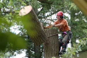 Tree removal experts in Canada
